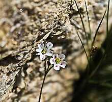 Macro Alpine Life by Katagram