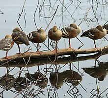 All Ducks in a Row by triciaoshea