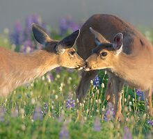 Deer Dear Kisses by Jim Stiles