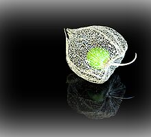 The Green Gooseberry on Black by Michelle Cocking