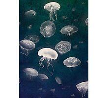 Jellyfish Photographic Print