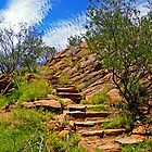 Meyer&#x27;s Hill Track, Alice Springs by TonyCrehan