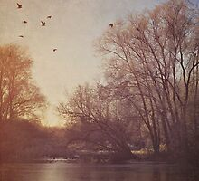 Birds take flight over lake on an early winters morning by Lyn  Randle