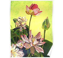 Citron Lotus 1 Poster