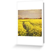 Yellow rapeseed field Greeting Card