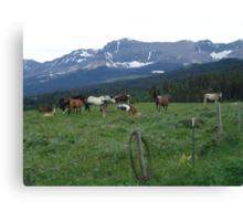 BLACKFOOT HORSE BAND - NEAR BROWNING, MT Canvas Print
