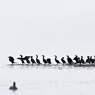 Logging in the Fog - Double-crested Cormorants by Tom Talbott