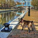 The HDR Terrier....Salford Quays by VoluntaryRanger