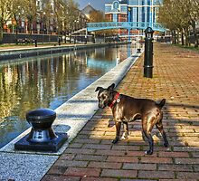 The HDR Terrier....Salford Quays by Jamie  Green