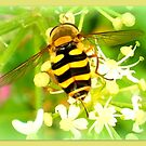Hoverfly  by ©The Creative  Minds