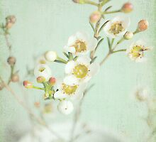 Blossom by Lyn  Randle