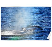 Humpback Whale taking a Breath Poster