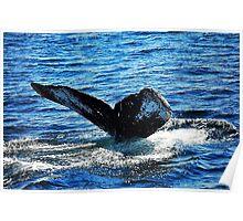 Humpback Whale Tail Fluke  Poster
