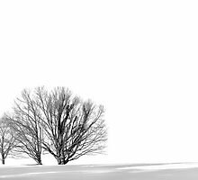 Winter White-out by cclaude