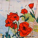 Ocean Grove Poppies by Alexandra Felgate