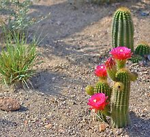 Desert Flower by KEBSD123