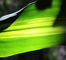 Sun shining through leaf - 3 by Terry Rodger Smith