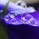 peaceful purple by Jan Stead JEMproductions