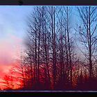 Winter Sunrise Through the Trees by Tori Snow
