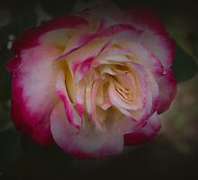 My Best Rose by Elaine Teague