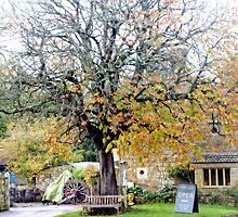 Perry's Cider Mills, Dowlish Wake, Ilminster, Somerset by lynn carter
