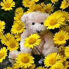 For Teddy Lovers Everywhere by lynn carter