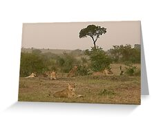 Seven Lions - Sieben Löwen Greeting Card