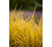 Grass Abstract 1 Photographic Print