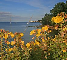 Studland by RedHillDigital