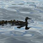 The Duck Family by pixrit