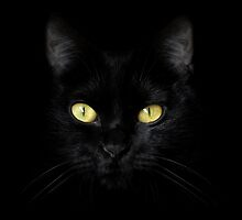 The Cat - Black on Black by Wojciech Dabrowski