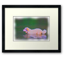 Goliath River Pausing EX Framed Print