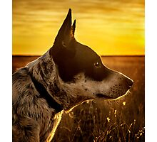 Angel Dog Photographic Print