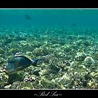 Red Sea by stswilliams