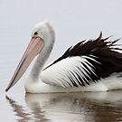 Australian Pelican by Will Hore-Lacy