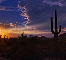 A Saguaro Sunset  by Saija  Lehtonen