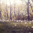 Dandelion Field by KendraJKantor
