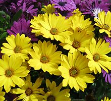 Sunshine Daisies by kathrynsgallery