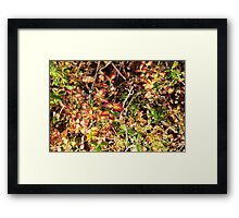 At countryhouse Framed Print