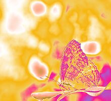 Pop Art Butterfly on leaf  by Nhan Ngo