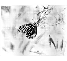 Vintage Beautiful Butterfly on flower - Black and White Poster