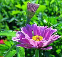 Blooming Purple Flowers by Cynthia48
