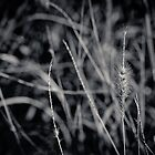 The Grass by Sally Werner