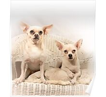 Chihuahua Gothic Poster
