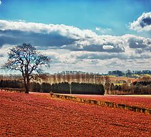 Tangerine Fields by Vicki Field