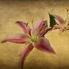 Vintage Asian Lillies by Irene  Burdell