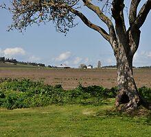 Prairie Tree Framing a Farmhouse by Jim Adams