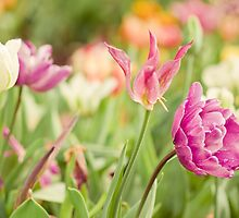 Spring Tulips by Zoe Power