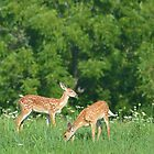 Fawns in field of flowers by Ben Waggoner
