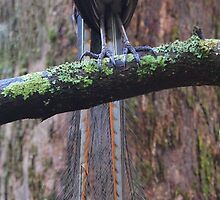 A bird's tale  by Donovan wilson